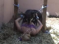 Dog Sex คลิปโป๊หมาข่มขืนคน ผัวโรคจิตจับเมียมัดให้หมาเย็ดหีเมียตัวเอง